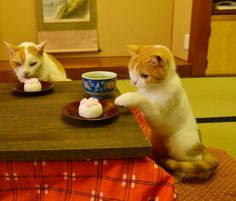 Twitter / nyalan_jalan: ししょー… ホワイトバレンタインには、 『肉球まんじゅう』なにょですね。