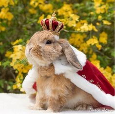 Meet PuiPui, The Most Fashionable Rabbit in the World - Neatorama