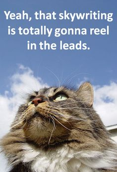 The Painful Truth About Outbound Marketing Kittens [Humor]