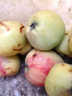 Alma ecet Medicinal Herbs, Apple, Fruit, Apple Fruit, Apples