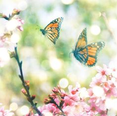 nature photography butterfly photograph i would by MyanSoffia, $5.00