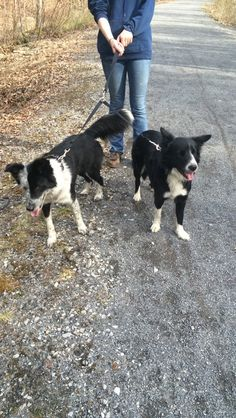 Boo and Floss, a friends of mines dogs from Fly's first and second litter of pups. Floss is a full sister to Tipsy.