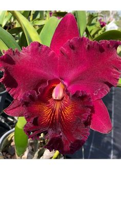 Red Orchids, Plants, I Love, Flowers, Plant, Planets