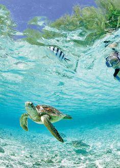 Ga snorkelen en zie schildpadden van dichtbij in hun natuurlijke omgeving!  http://www.333travel.nl/strandvakantie/malediven/fun-island-resort-vertrek-vanuit-dusseldorf?productcode=A507