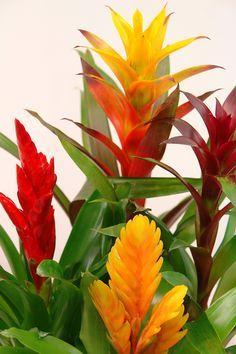 7 plantas para cultivar dentro de casa - Casinha Arrumada