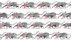 Opinion | The rats are coming. Here's how we can keep them away. Rat Infestation, Getting Rid Of Rats, Brown Rat, Environmental Health, Health Department, Natural World, Canning, Mice, Washington