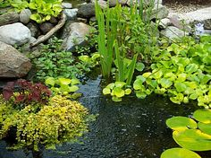 Naturalized pond plantings