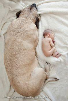 5 World's Heaviest Dog Breeds