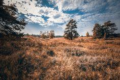 Heide Landschaft im Herbst. Heath Landscape in the Autumn.