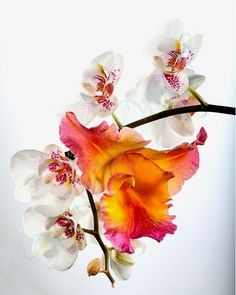 I am in mad love with orchids + their color palette.