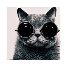 FFFFOUND! ❤ liked on Polyvore featuring animals, cats, backgrounds, pictures and photos