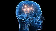 Identifican células cerebrales que controlan el envejecimiento