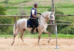 Hanibal Interagro  Prova Interna de Equitação de Trabalho | In-house Working Equitation Test