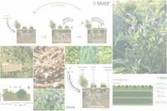 Balkan Ecology Project : Perennial Polycultures - The Biomass Belt: Fertility Without Manure