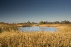 Norfolk Wildlife Trust - Hickling Broad: day trip involving boating, waterside pubs, wildlife and pretty villages