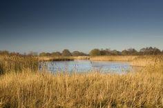 Norfolk Wildlife Trust - Hickling Broad: