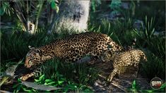 #leopard #nature #animal #animation #gamedev #gameart #UE4 #unrealengine #unity Unreal Engine, Unity, Asset Store, Adventure, Characters, Animation, Animals, 3d, Studio