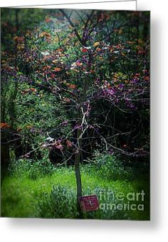 Moonlit Redbud Greeting Card by Shelly Weingart