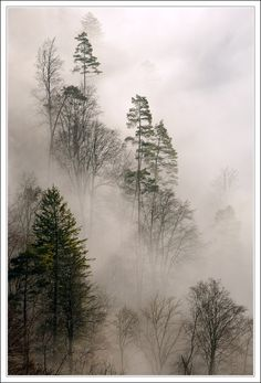 Trees in fog, a photo from Baden-Wurttemberg, West The scenery in my state of B-W can be magnificent at times! Cool Pictures, Beautiful Pictures, Charcoal Art, Natural Phenomena, Cool Plants, Natural Wonders, How Beautiful, Amazing Nature, Trees To Plant