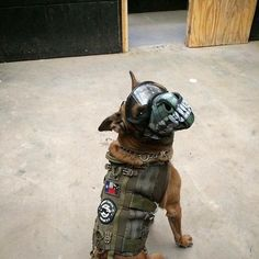 Working dogs have natural talents that are carefully honed with intensive training to perform jobs that help humans. Military Working Dogs, Military Dogs, Police Dogs, Dog Armor, Berger Malinois, Pallet Dog Beds, Reactive Dog, Dog Yard, War Dogs