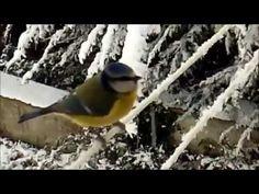 Il Topolino e il Cardellino, la poesia dalla natura