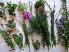 Quelques herbes du jardin bio/Herbs picked from organic garden