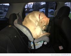 dog in a baby car seat