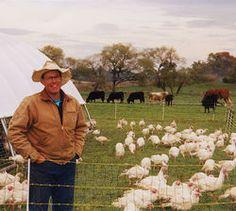 Chickens and Cows, a la Joel Salatin