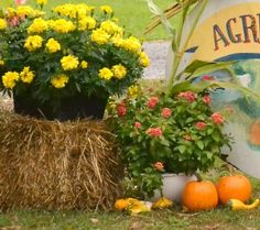 Mix potted flowers with pumpkins and gourds for a simple but lovely autumn display. The hay bale adds height as well as a rustic feeling.