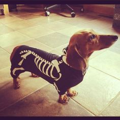 Best Halloween costume ever!!