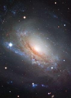 Supernova 2003cg in the galaxy NGC 3169
