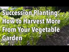 ▶ Succession Planting - How to Harvest More From Your Vegetable Garden - YouTube Sowing or planting into gaps left behind after a crop is harvested is known as succession planting.  Filling gaps as soon as crops are harvested will maximize the amount of food you can grow, making your garden space even more valuable and helping to reduce weed growth.   In this video we explain how to plan succession crops and which crops are best for growing this way.