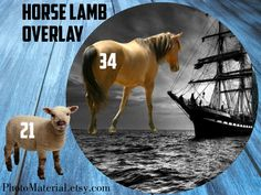 Horse overlay Sheep Lamb overlays Horses clipart White horse