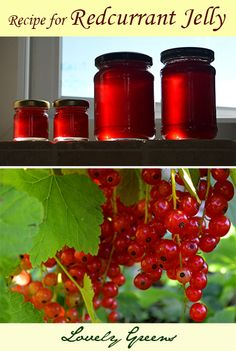 Redcurrant Jelly Recipe - sweet and tart, this jelly is perfect for either sweet treats or as an accompaniment for swedish meatballs. by kendra Red Currant Jelly Recipe, Currant Recipes, Red Currant Jam, Jelly Recipes, Jam Recipes, Canning Recipes, Home Canning, Jam And Jelly, Vegetable Drinks