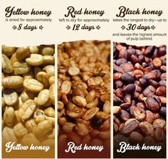 Coffee drying chart. combined with the appropriate roasting method equals a mellow cuppa!