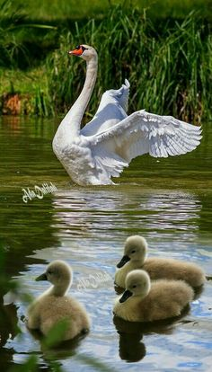 Pretty Birds, Love Birds, Beautiful Birds, Animals Beautiful, Animals Of The World, Animals And Pets, Baby Animals, Cute Animals, Bird Pictures