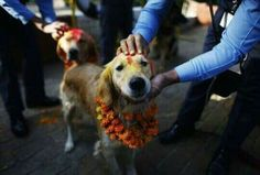 Nepal's festival to honor dogs for their special relationship with humans