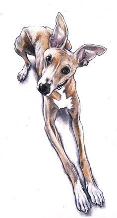 Custom pet portrait of Oliver Whippet. https://www.youtube.com/watch?v=Nr1i5HTn90Y