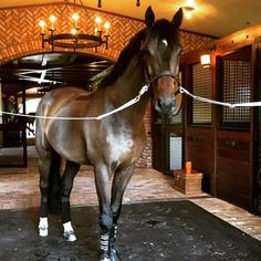 Beautiful horse in a gorgeous barn Horse Stables, Horse Barns, Equestrian Stables, Cute Horses, Beautiful Horses, Pretty Horses, Magnificent Beasts, Bay Horse, Dressage Horses