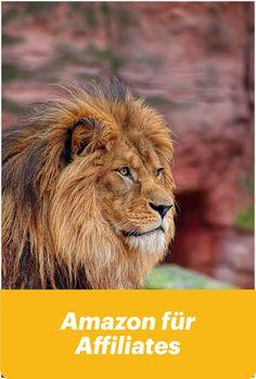 Free Image on Pixabay - Lion, Mane, Zoo, Big Cat, Cat Lion Mane Zoo Big - Free photo on Pixabay Cat Lion Costume, Lion Halloween Costume, Lion Mane For Cat, Pet Lion, Life Of Lion, Lion's Mane Jellyfish, Jungle Lion, Gato Grande, Animals