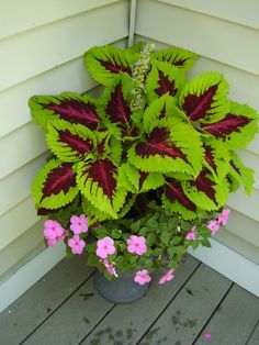 Coleus with impatiens...love this. I need a place to put it that it won't fry!