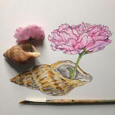 shell & blossom flashback