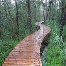Afbeeldingsresultaat voor natuur den bosch