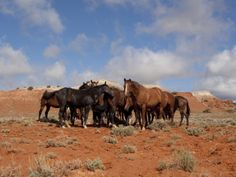 Herd of Wild Horses, Wyoming Photographic Print by Lynn M. Stone at AllPosters.com