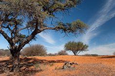 Kalahari Desert - Destinations