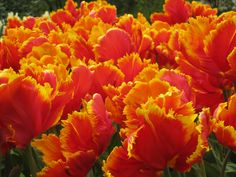 At the Keukenhof, when I went back in 2010.  My proudest photo achievement too :P