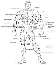 91 Best Alimayo Arango's Musclegeek and Bodybuilding Stuff
