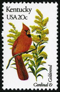 ◙ U.S.A. Kentucky Postage Stamp featuring the state bird and flower. Issued in 1982. ◙