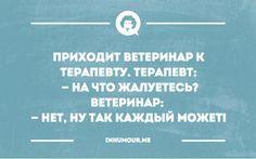 Корги в Нижнем Новгороде
