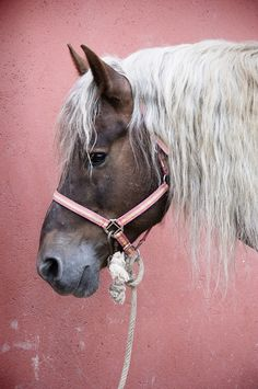 Pretty Horse with an interesting looking leadrope.